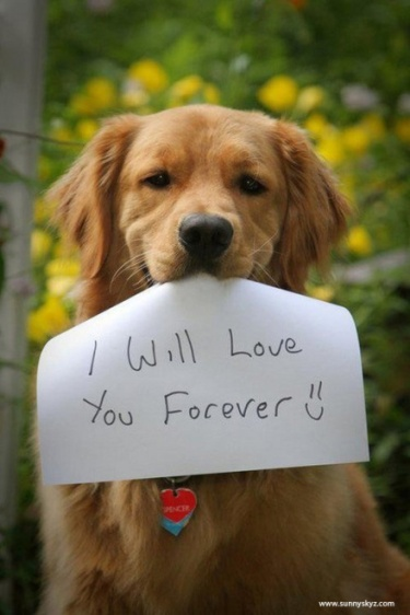 svznb-dog-love-you-forever2.jpg